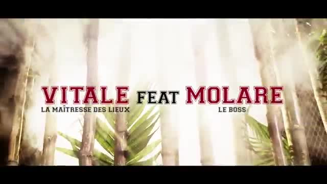 vitale ft molare